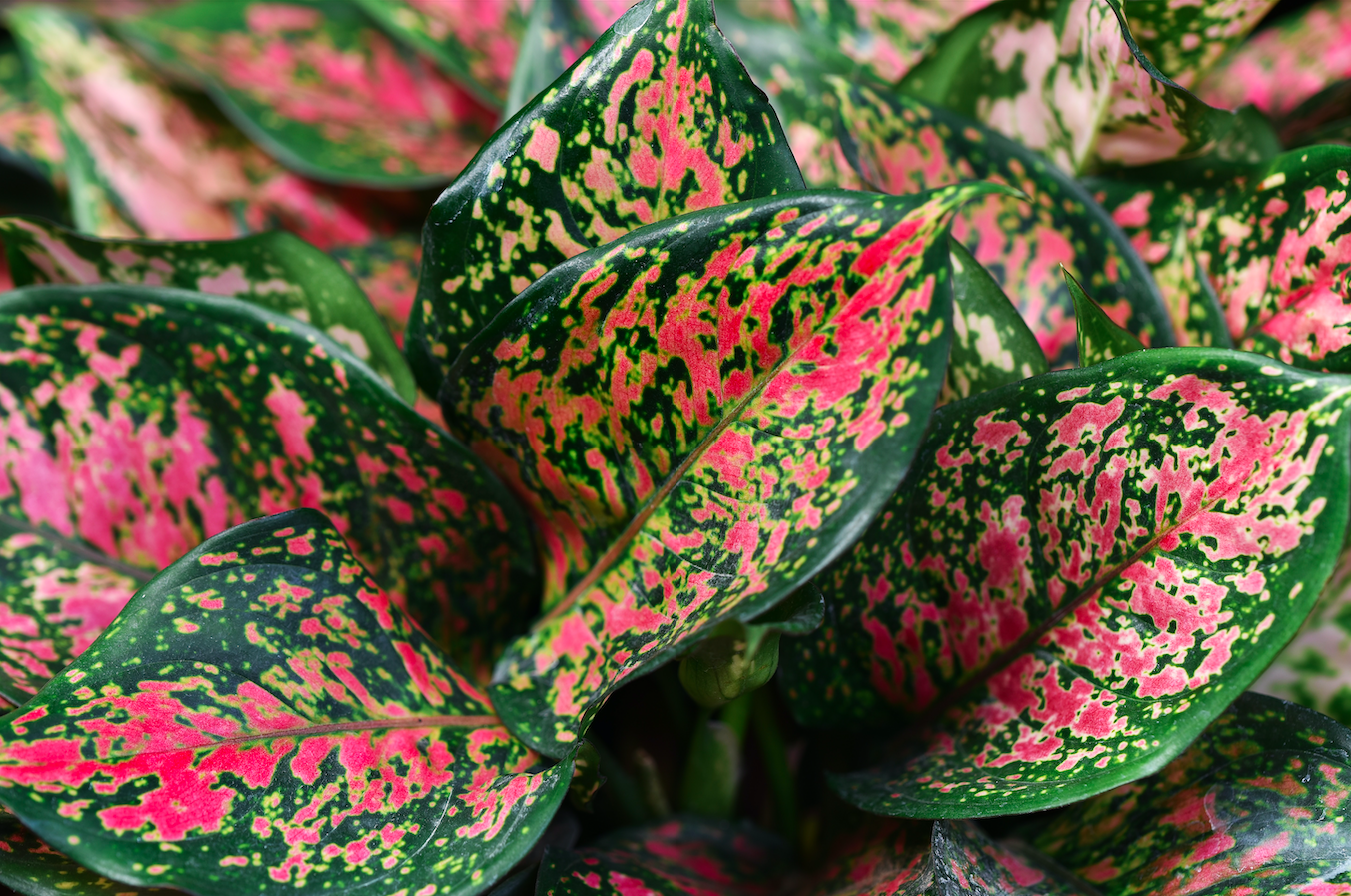 Top 5 Mistakes to Avoid With Indoor Plants