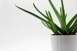 Why You Should be Adding More Aloe in Your Life