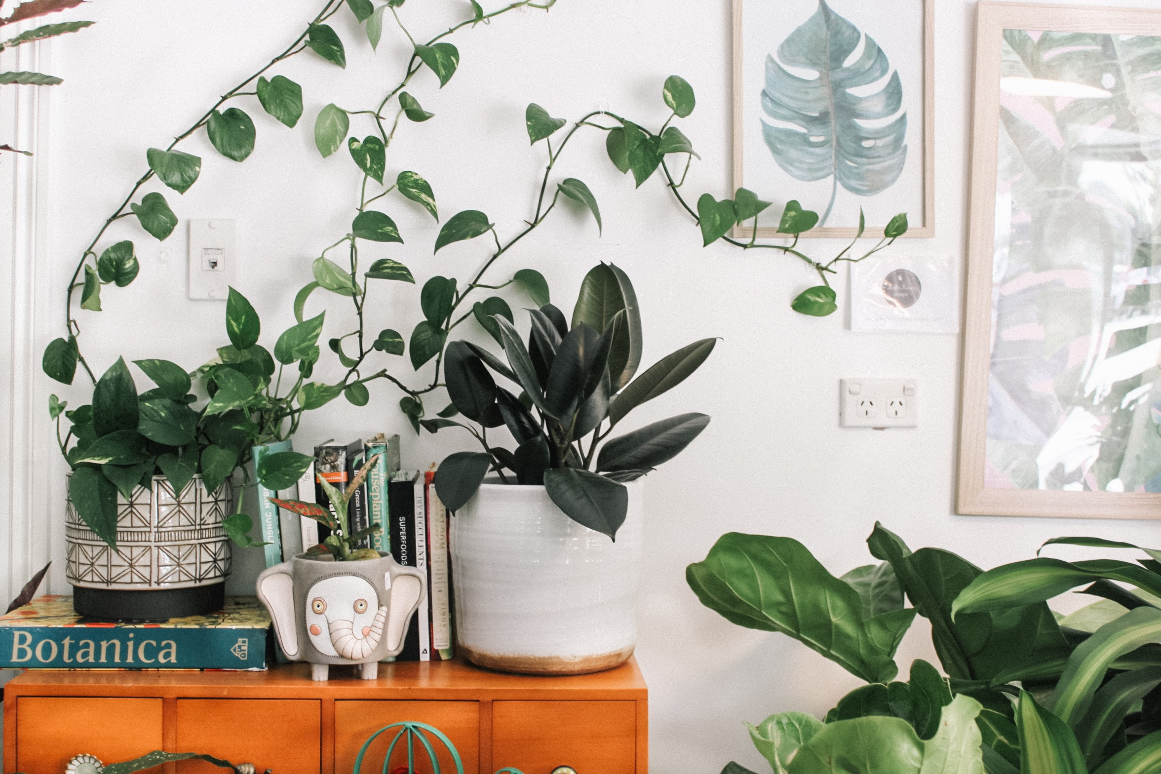 Best Features To Have In A Plant Stand