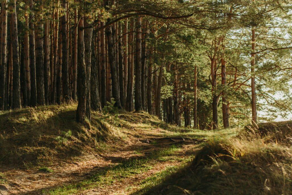 The sun shines through a lush forest.