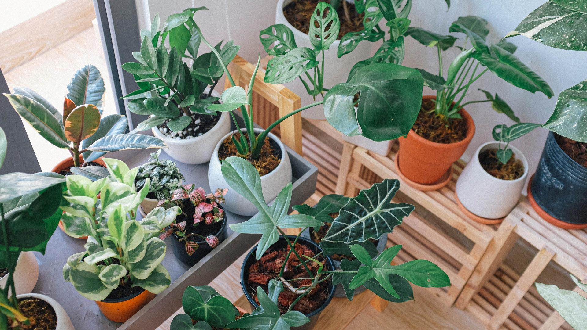 Top 5 Indoor Winter Plants
